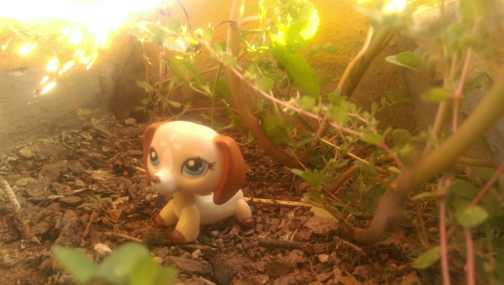 Small animal doll on the ground, dirt and leaves around it, the sun shining on it